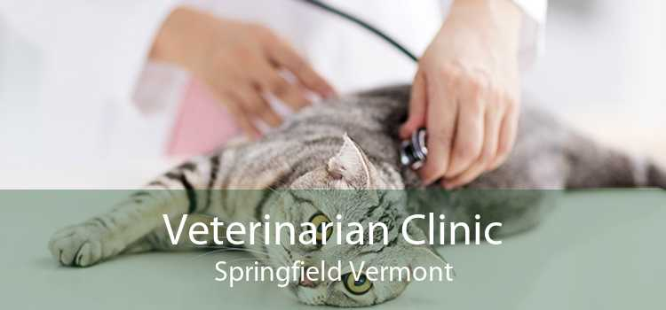 Veterinarian Clinic Springfield Vermont