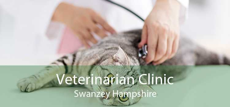 Veterinarian Clinic Swanzey Hampshire